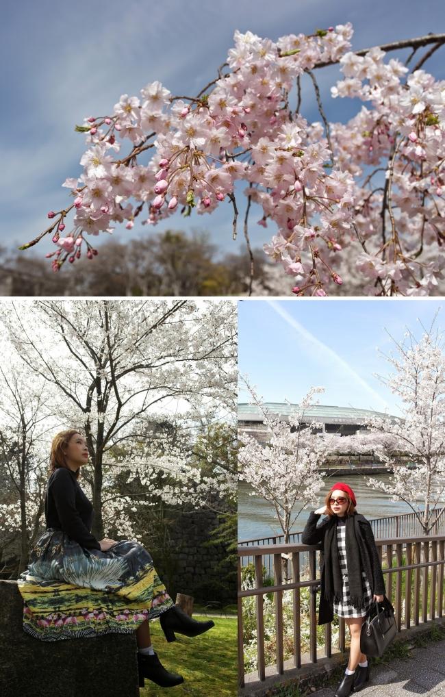 Sakura_osaka